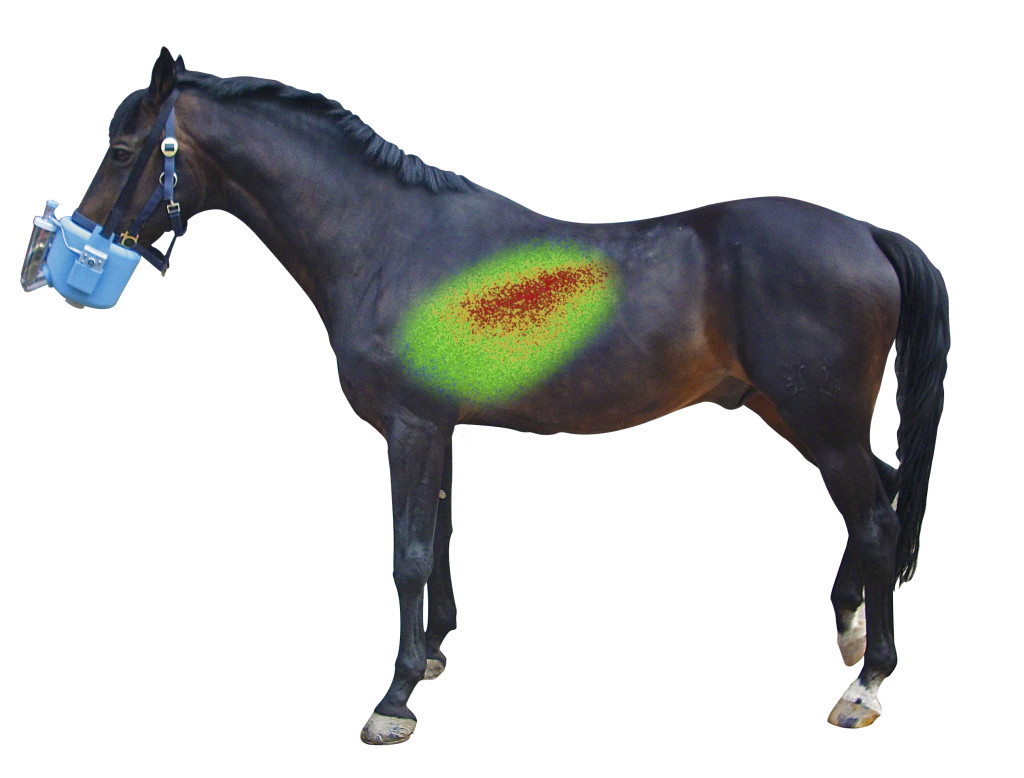nuclear-image-on-horse